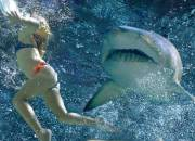 Tiburón atacando a una mujer